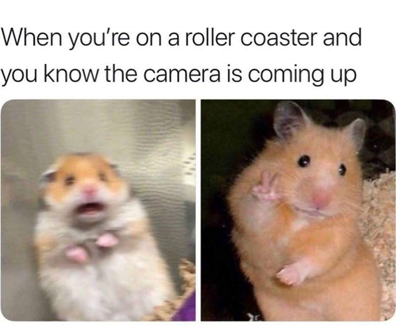 Naam:     rollercoaster.jpg Bekeken:  83 Groote:   76,3 KB